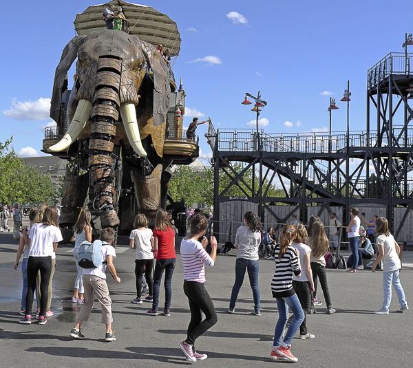 ANIMAUX FANTASTIQUES Olivier Tardiveau Photographe Nantes étonnante Éléphant b1-60
