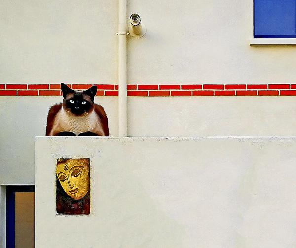 DRÔLERIES DROLATIQUES Olivier Tardiveau Photographe Nantes étonnante Mimétisme a13-17