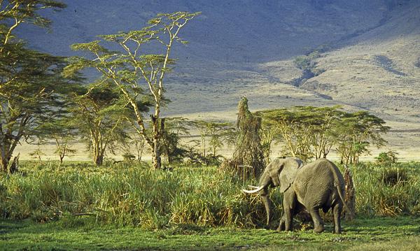 Vacances Olivier Tardiveau Photographe Nantes Natures Tanzanie ngorongoro b5-0