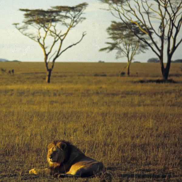 Vacances Olivier Tardiveau Photographe Nantes Natures Kenya b5-3a