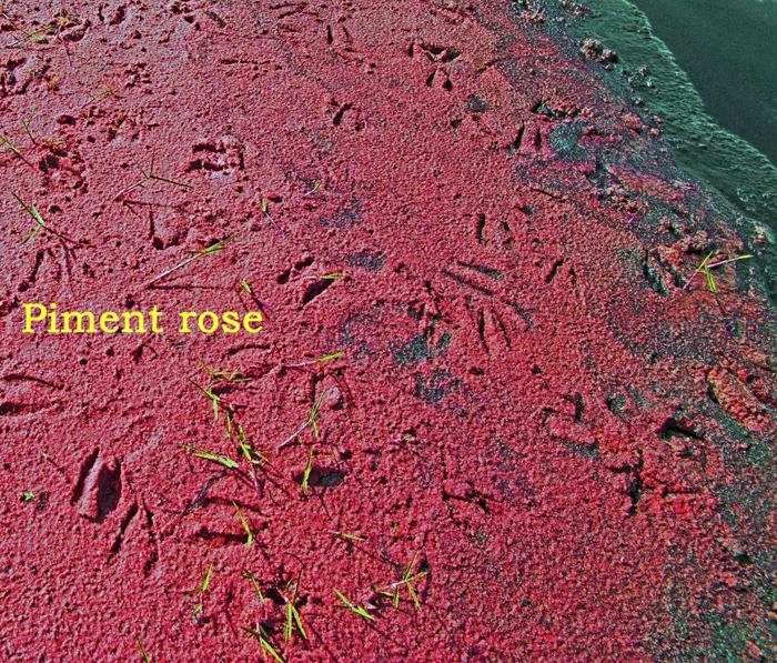 OLIVIER-TARDIVEAU_Photographe_A 40-5 - ECRTURES - PIMENT ROSE - BOTSWANA - dim