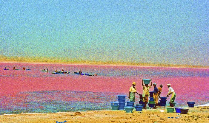 OLIVIER-TARDIVEAU_Photographe_A16 - 24 - HORIZONTALITES ETONNANTES - ROSE SENEGAL dim
